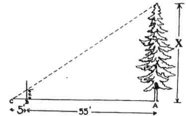 За допомогою пластової палиці, якщо ти позначив її цалевою поділкою, можеш визначити висоту дерева