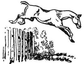 Тварини знають, як вправами утримувати свою силу. Кінь, залишений сам, скаче, немов з самої любови до спорту